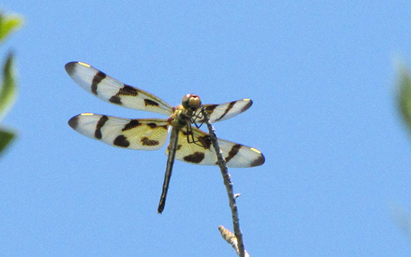 Halloween Pennant June 28
