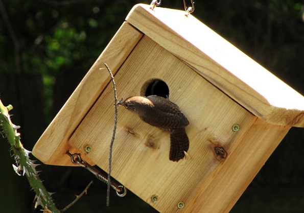 Nest Building June 17