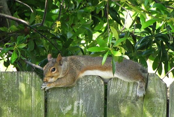 Squirrel May 31