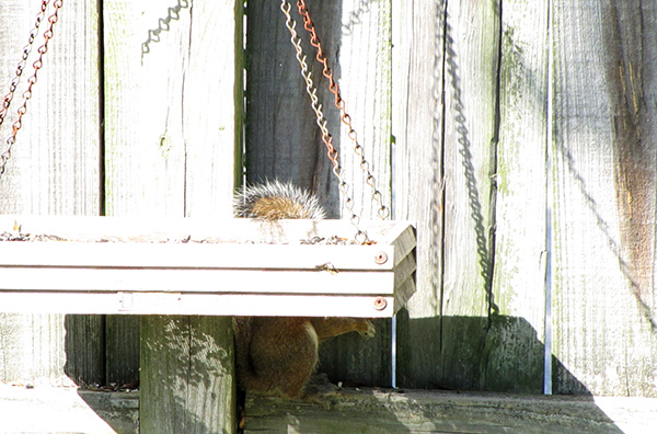 Squirrel May 31