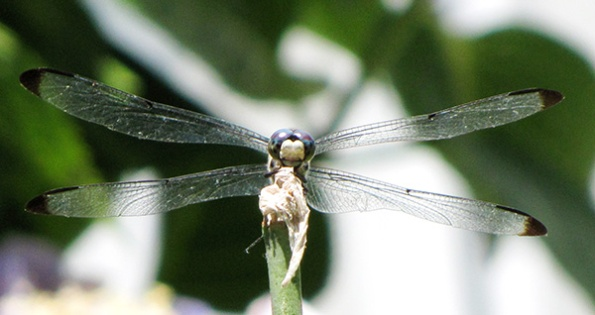 Dragonfly July 7