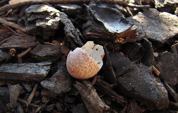 Egg July 20