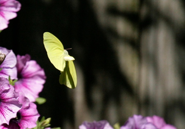 Butterfly August 15