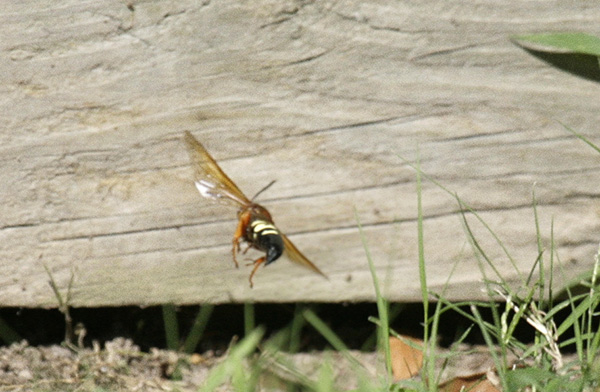 Wasp August 15