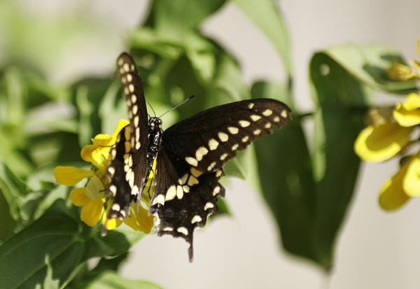 Butterfly Sept 13