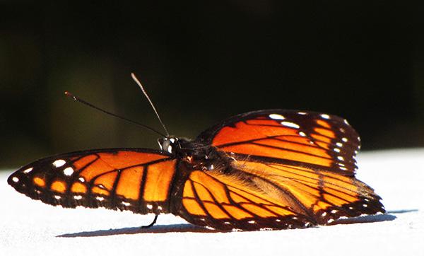 Butterfly Sept 30