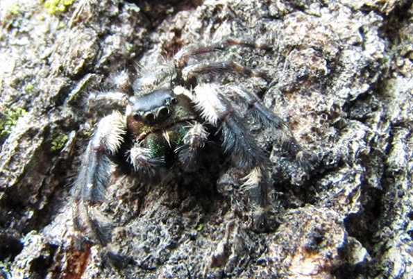 Spider Oct 2
