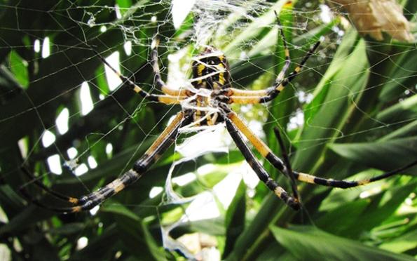Spider Sept 30