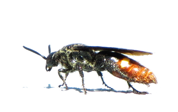 Unknown Wasp Sept 27