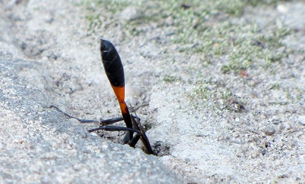 Wasp Sept 11