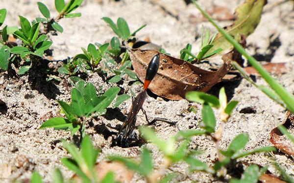 Wasp Sept 7