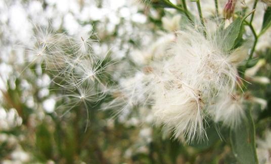 Seeds Nov 4