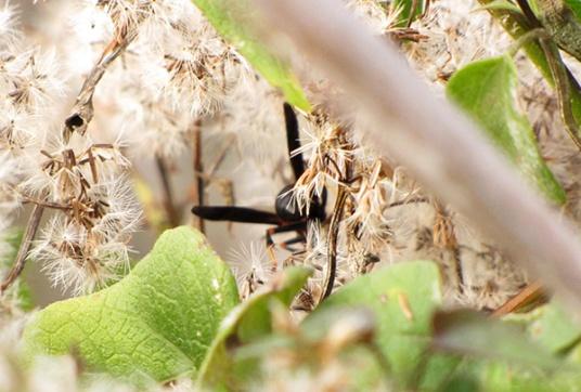 Wasp Nov 5