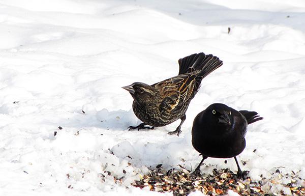Birds Jan 23