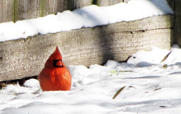Cardinal Jan 22
