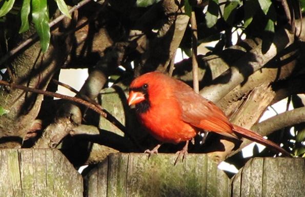 Cardinal Jan 4