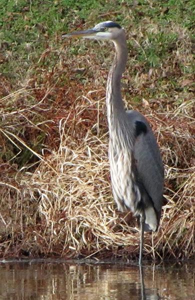 Heron Jan 5