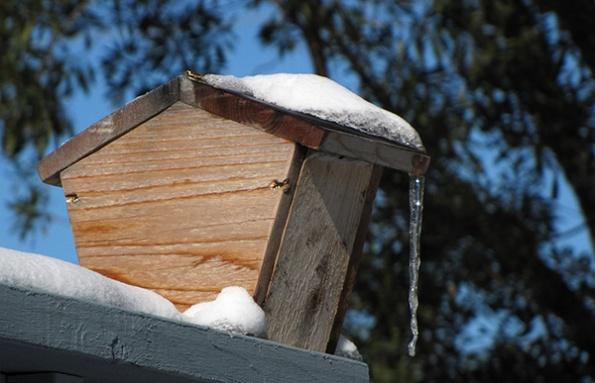 Snow Jan 22