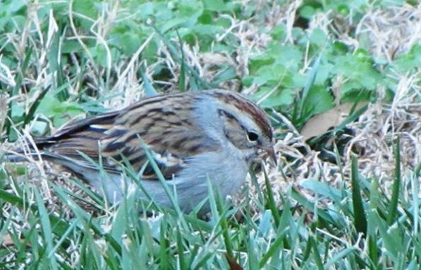 Sparrow Jan 4