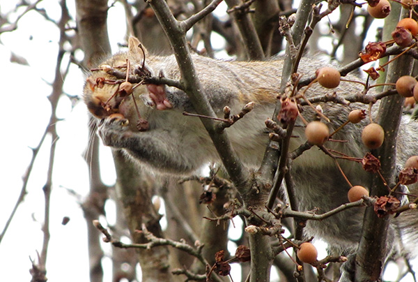 Squirrel Jan 2