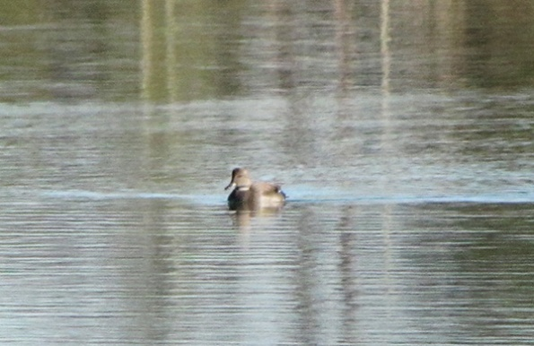 Unknown Duck Jan 8