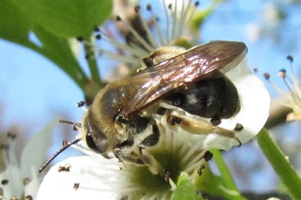 Bee April 9