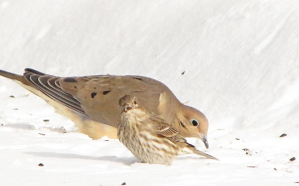 Dove and Finch Jan 29