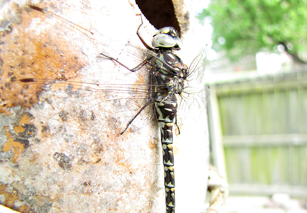 Dragonfly April 14