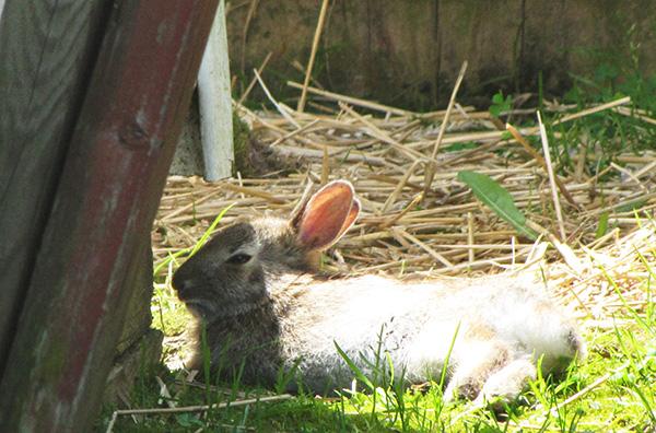 Rabbit April 22
