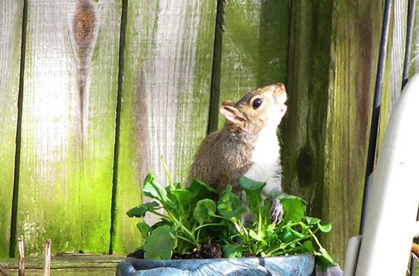 Squirrel Jan 15