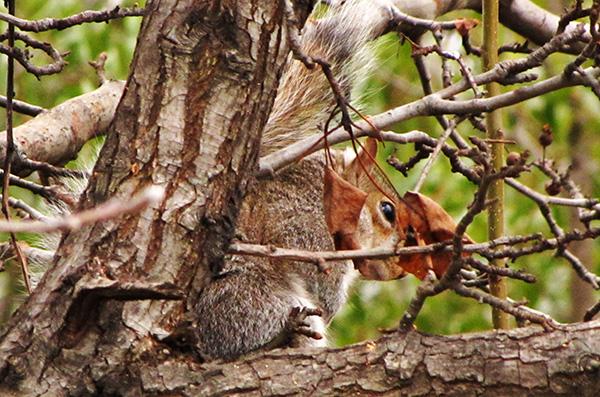 Squirrel Jan 16