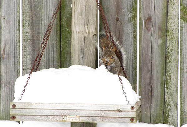 Squirrel Jan 29