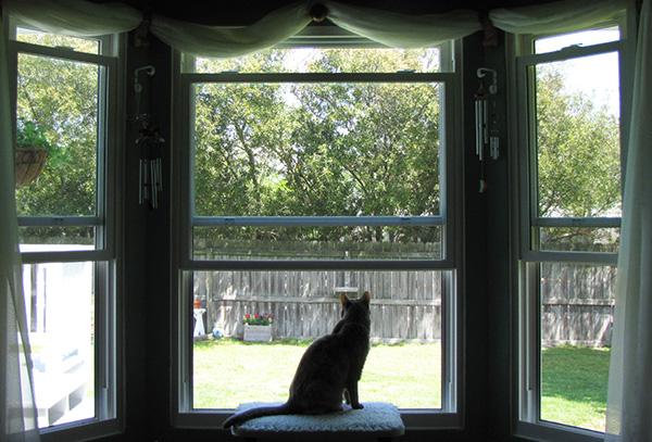 Window April 22