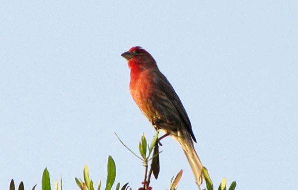 Finch May 9