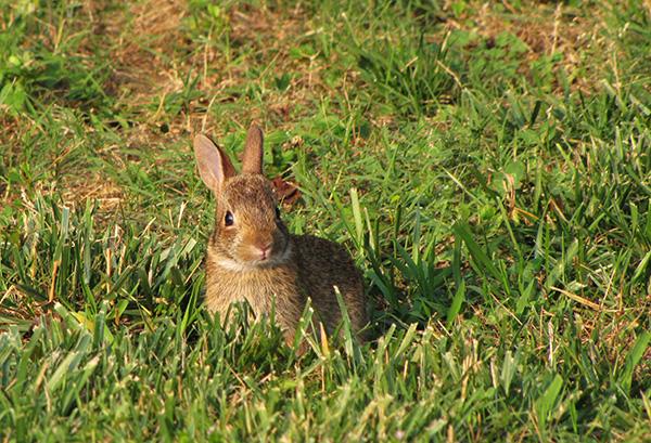 Rabbit June 16