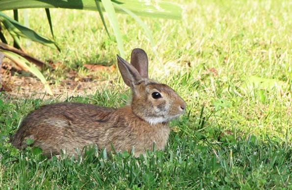 Rabbit May 27