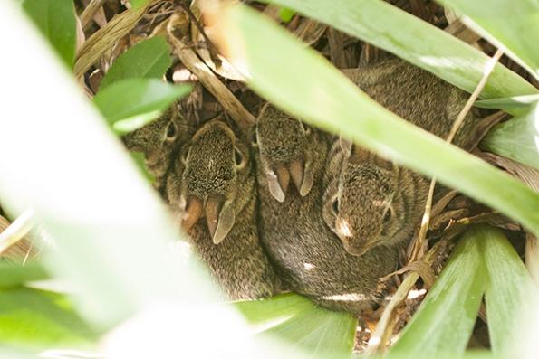Rabbits June 14