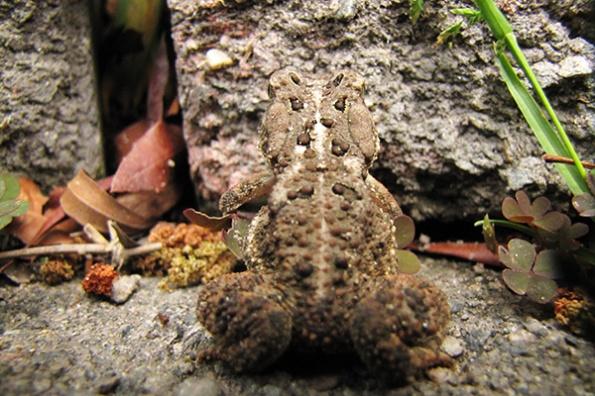 Toad May 2