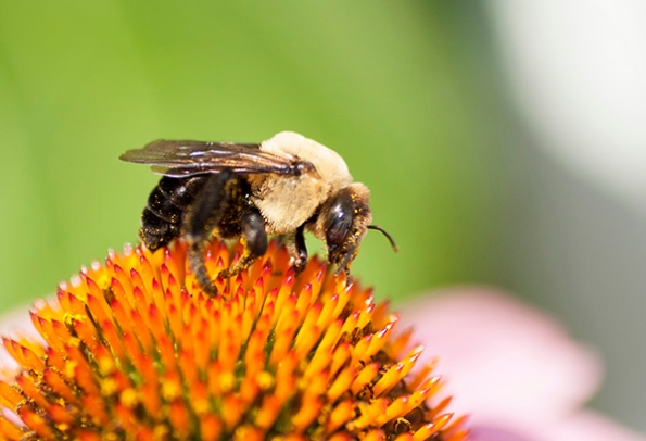Bee June 27