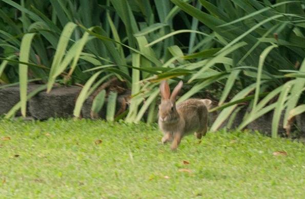 Rabbit July 20