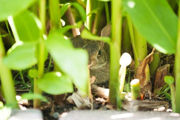 Rabbit June 26