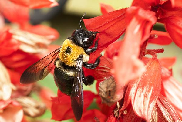 Bee Aug 12