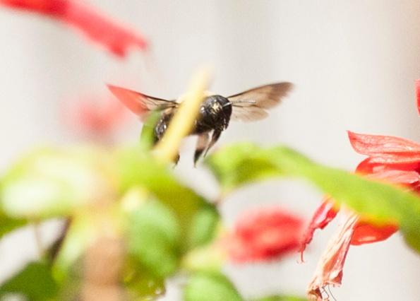 Bee Aug 31