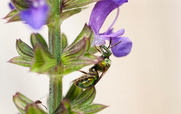 Bee July 15