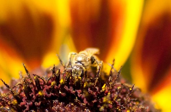 Bee July 25