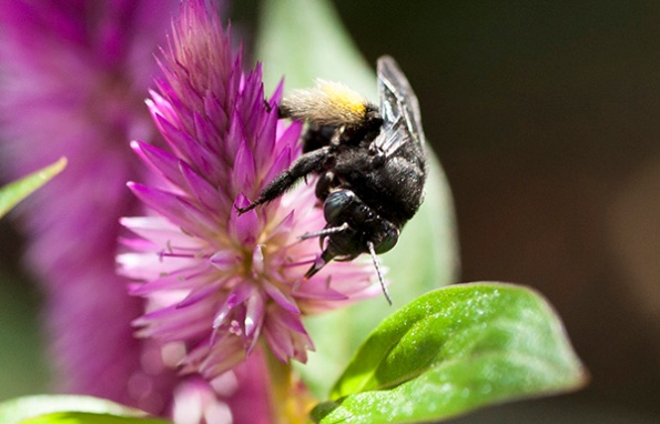 Bee July 28