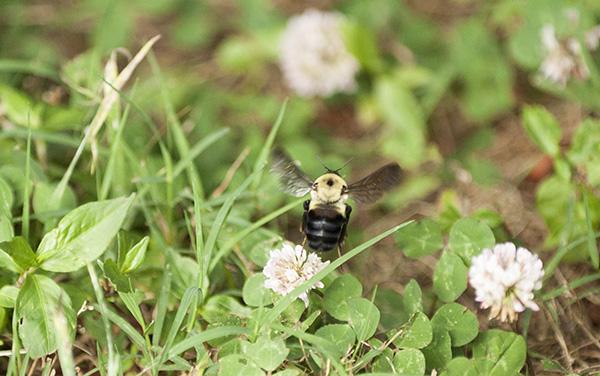 Bee June 14