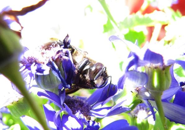 Bee May 19
