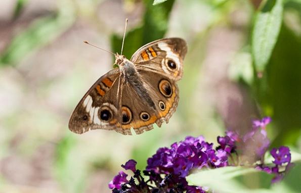 Butterfly July 28