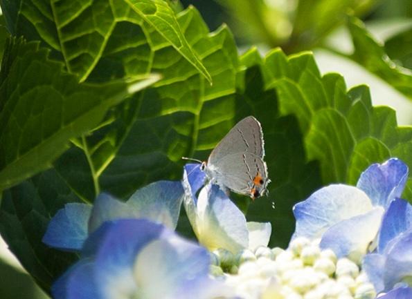 Butterfly June 18